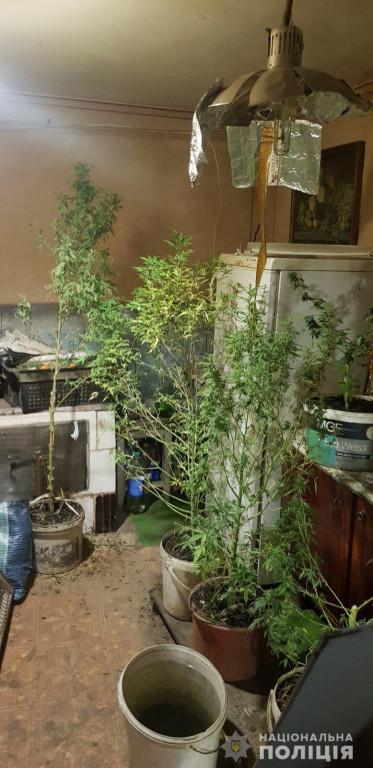Справжній садівник: на Рахівщині юнак вдома вирощував канабіс (ФОТО)