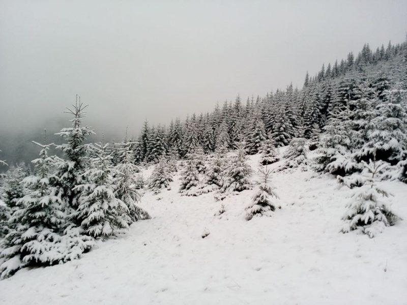 Зима ще тут: на Закарпатті знову травневі снігопади (ВІДЕО)