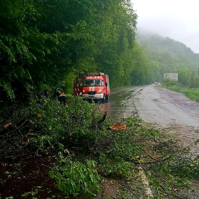 Через негоду на Закарпатті на автошлях впало дерево (ФОТО)