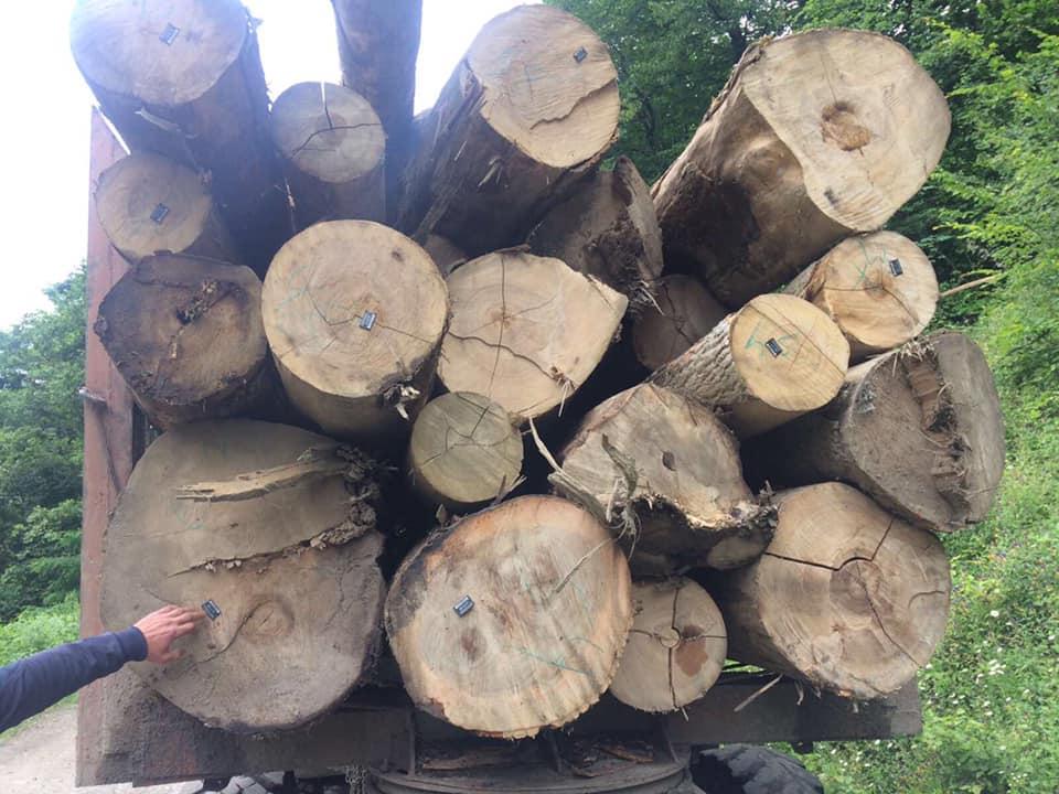 На Рахівщині небайдужі жителі не дають нищити ліс (ВІДЕО)