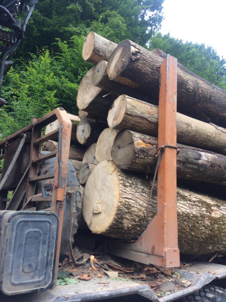На Рахівщині правоохоронці встановлюють походження деревини, яку перевозили на підставі підроблених документів (ФОТО)