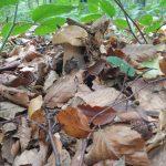 На Закарпатті пік грибного сезону (фото)