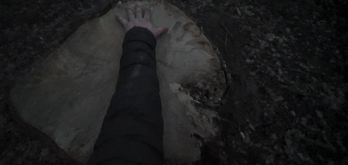 На Берегівщині активісти виявили незаконну вирубку лісу (ФОТО, ВІДЕО)