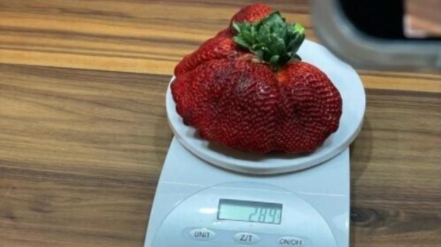 ягода, горіх, фрукт, ананас, факти