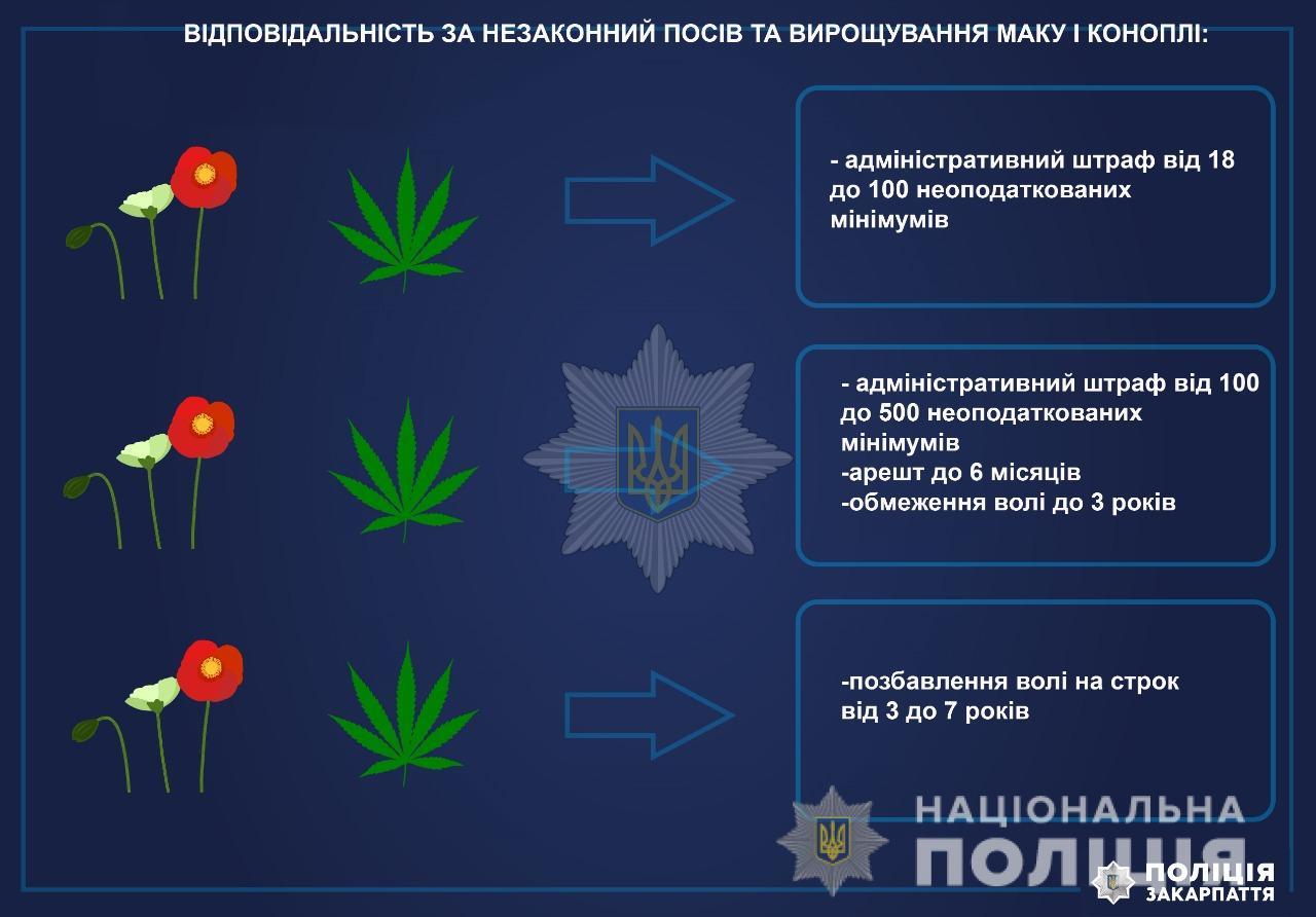 """""""Мак-2021"""": на Закарпатті правоохоронці розпочали спецоперацію"""